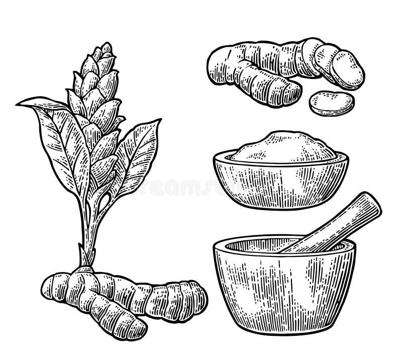 Turmeric ρίζα, σκόνη και λουλούδι με το γουδοχέρι και το κονίαμα διανυσματική απεικόνιση