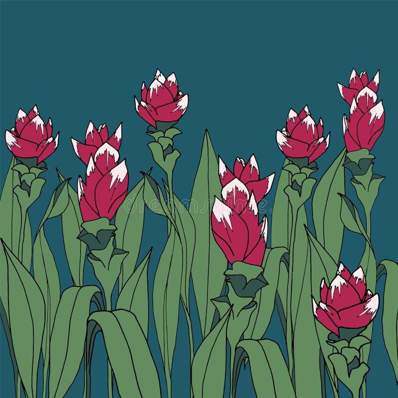 Turmeric flower  stock illustration