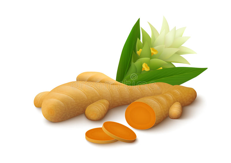 Turmeric with flower on white background stock image