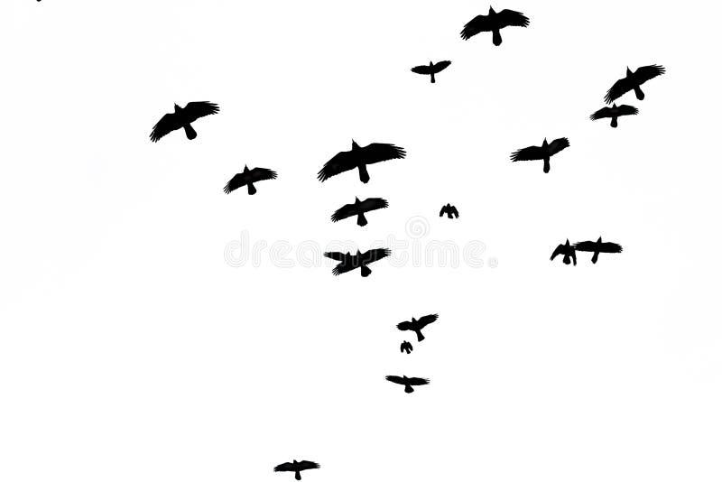 Turmmengenfliegen durch den Himmel stockbilder