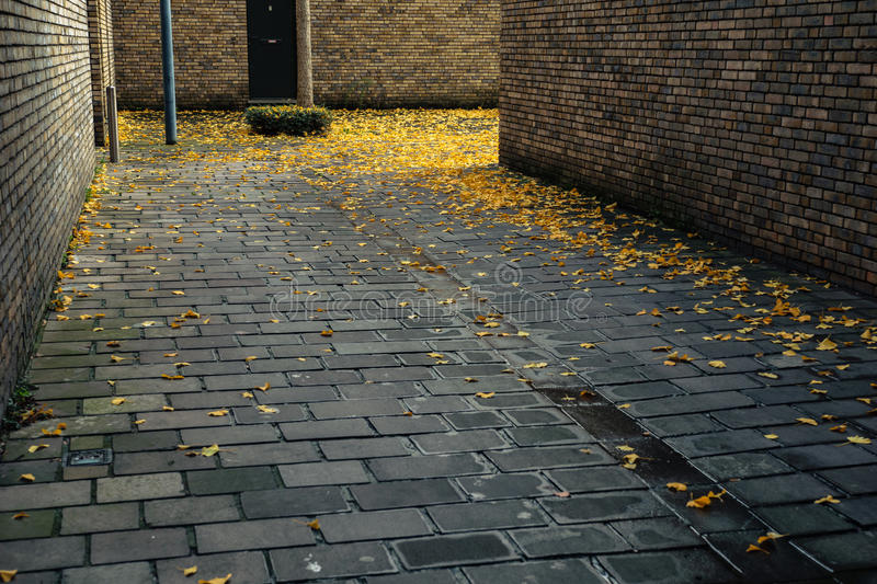 Turn of the pavement with yellow fallen leaves. On it royalty free stock images