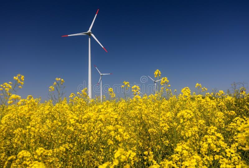 turnbines wind Поля с ветрянками стоковая фотография rf