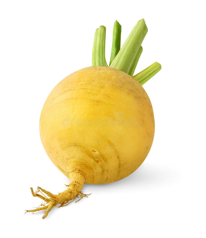 Isolated turnip. One yellow turnip isolated on white background stock images