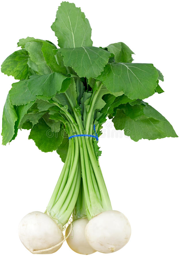 Turnip. Bunch of fresh turnip, isolated on white. Isolated with clipping paths . 2 images stitched. DFF image royalty free stock images