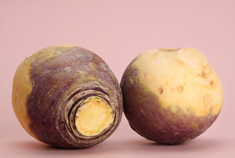Turnip stock images