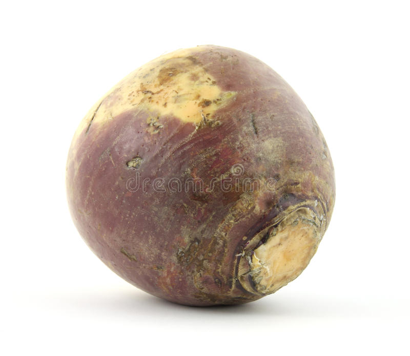 Turnip. A single waxed turnip against a white background stock photos