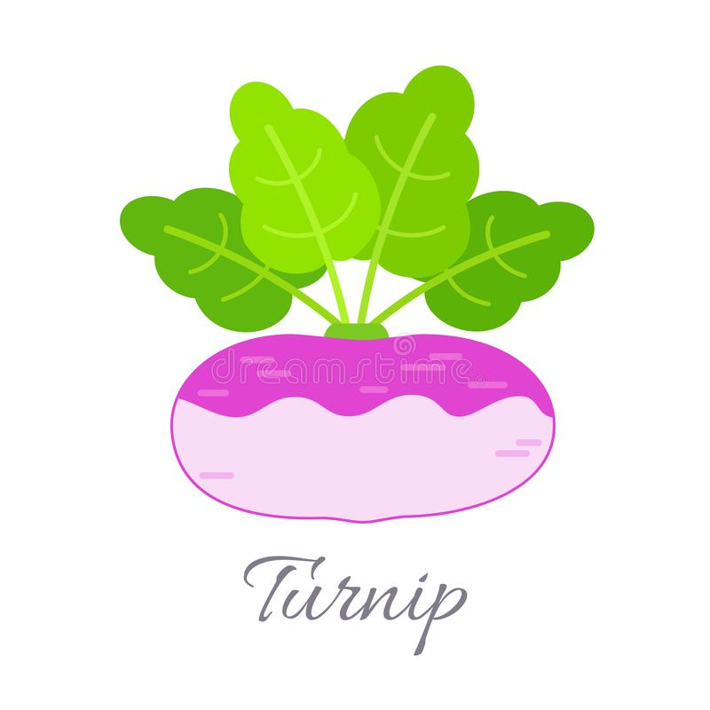 Turnip icon with title vector illustration