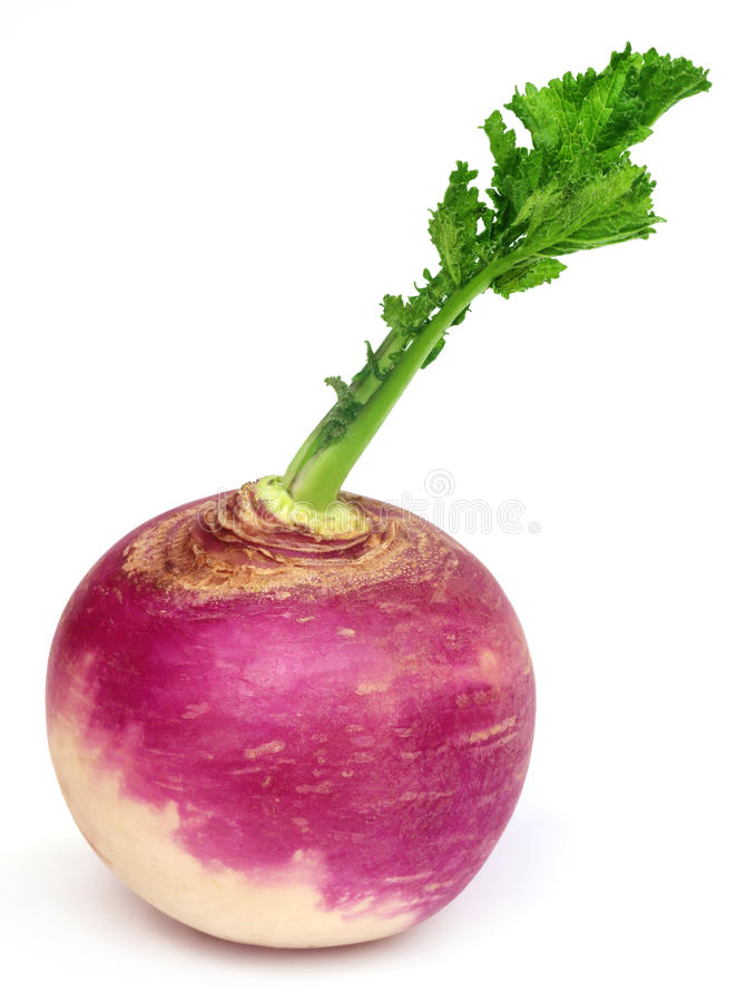 Turnip. With leaves over white background royalty free stock image
