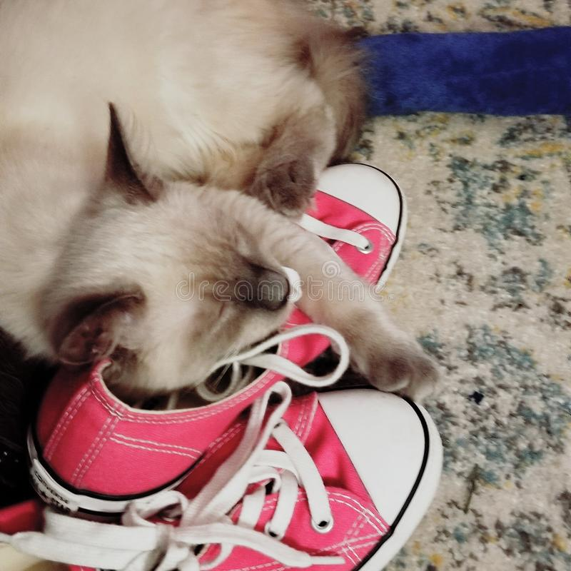 Turnschuhe u. Kätzchen stockbild