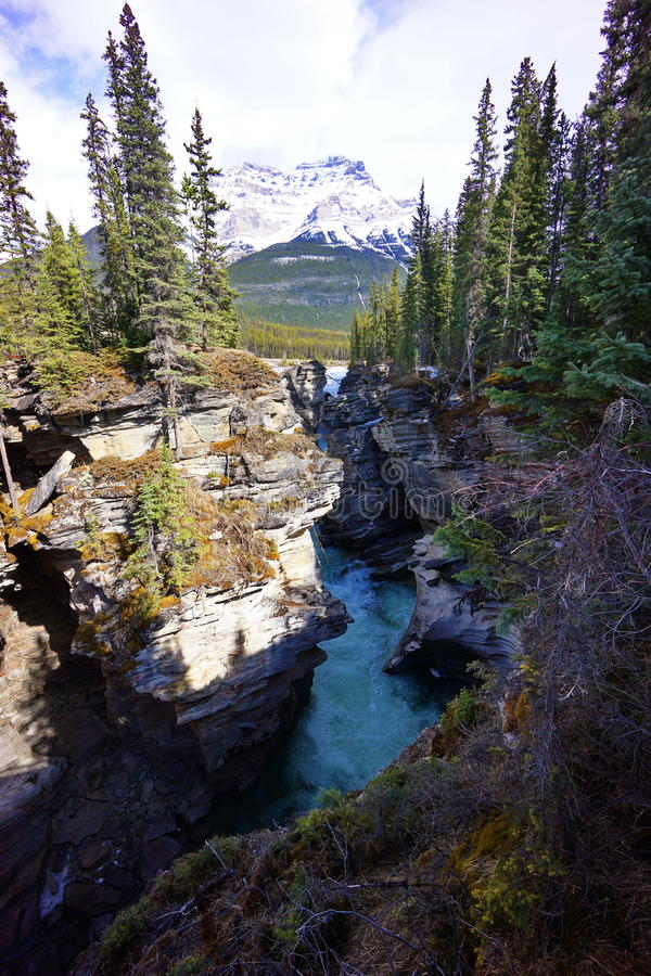 Turqouise water at Athabasca Falls stock photos