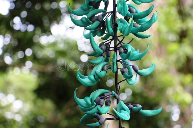Turquois flowers on Maui stock photos