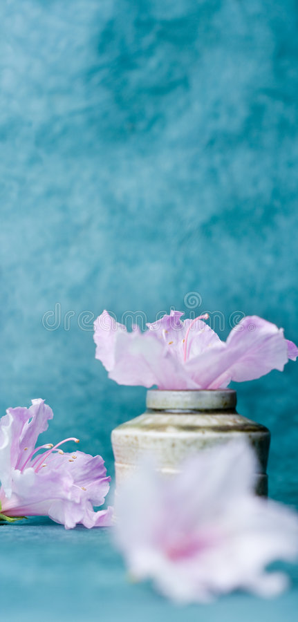 Turquoise background, flowers and hand-thrown pot royalty free stock images