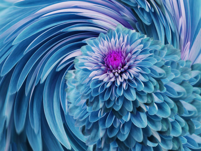 Turquoise-blue flowers chrysanthemum. blue-turquoise background. floral collage. flower composition. For design. royalty free illustration