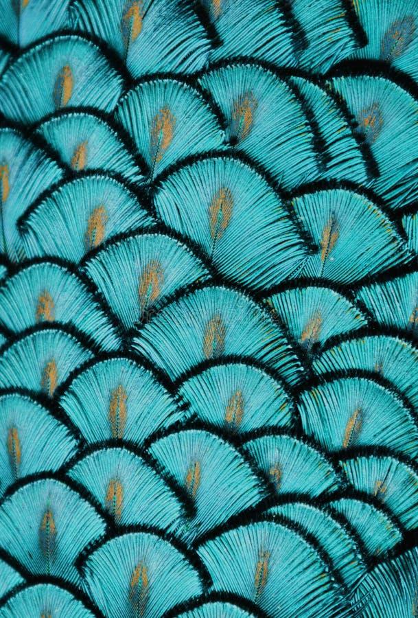 Turquoise Feathers. Macro photo of blue/turquoise bird feathers royalty free stock photography