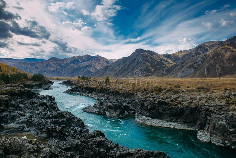 Turquoise Katun river in gorge is surrounded by high mountains under majestic autumn sky. A stormy mountain stream runs. Among rocks - landscape of the Altai royalty free stock photography