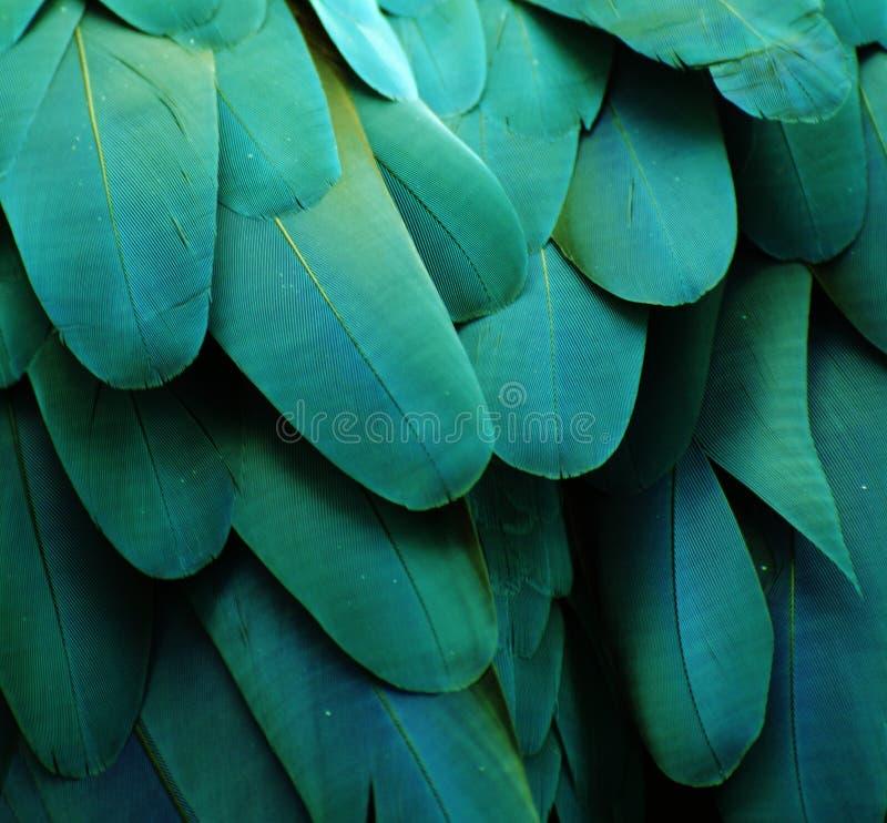Turquoise Macaw Feathers. Macro photo of blue/turquoise macaw feathers royalty free stock photography