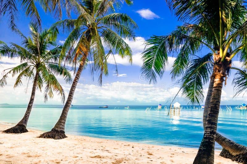Turquoise Palm Beach par l'île de quoc de Phu au Vietnam photo stock
