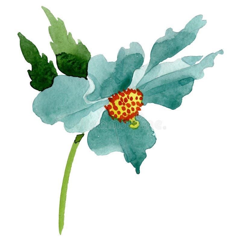 Turquoise poppy floral botanical flower. Watercolor background illustration set. Isolated poppy illustration element. Turquoise poppy floral botanical flower stock photography