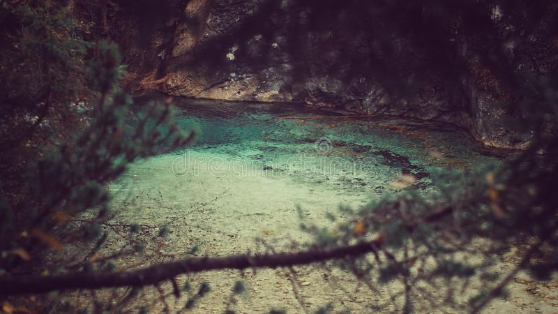 Turquoise river. Pišnica seen trough tree branches royalty free stock image
