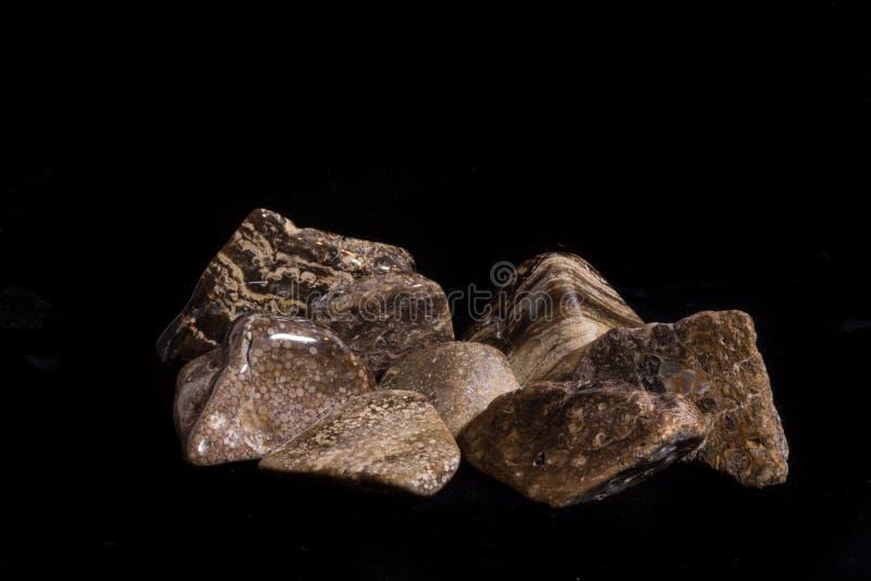 Turritella, Oolite, kleine Felsen Stromatolite poliert lizenzfreie stockbilder