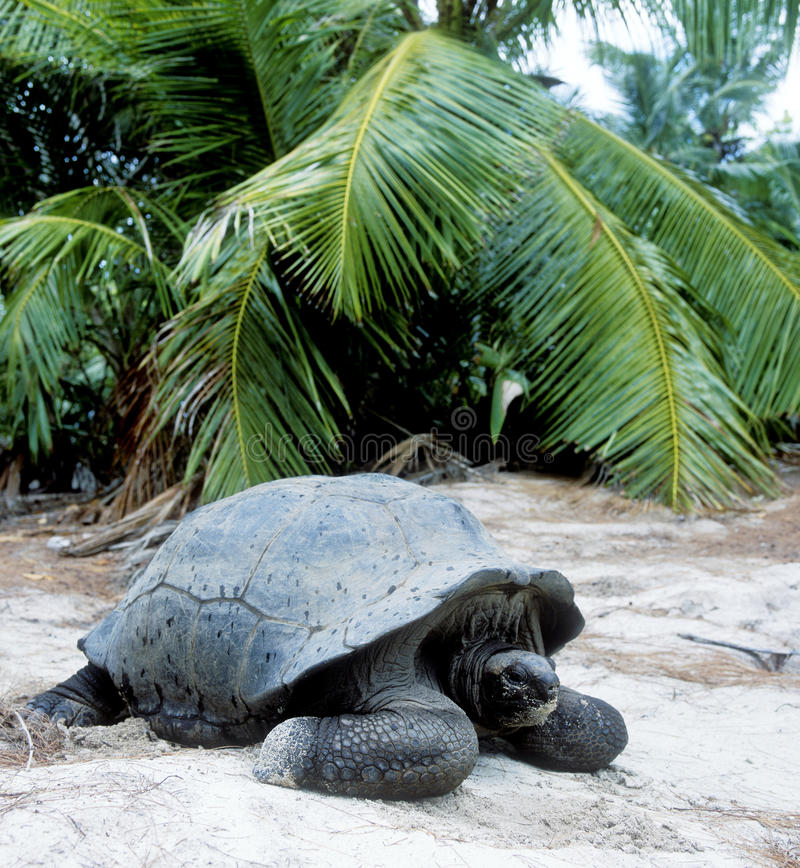 Download Turtle stock photo. Image of outdoors, islands, trees - 11598496