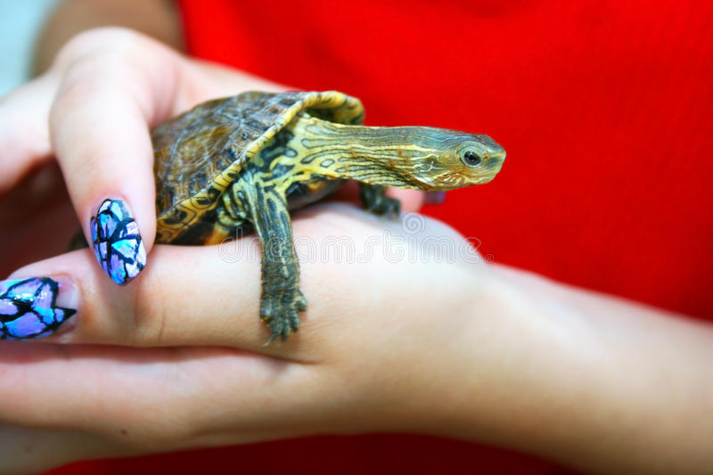 Download Turtle stock photo. Image of shell, protection, detail - 13884042