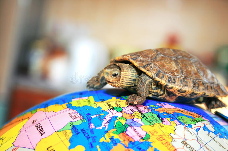 Download Turtle Stock Image - Image: 14003731