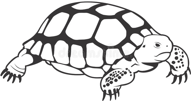 Download Turtle Royalty Free Stock Photo - Image: 1410205