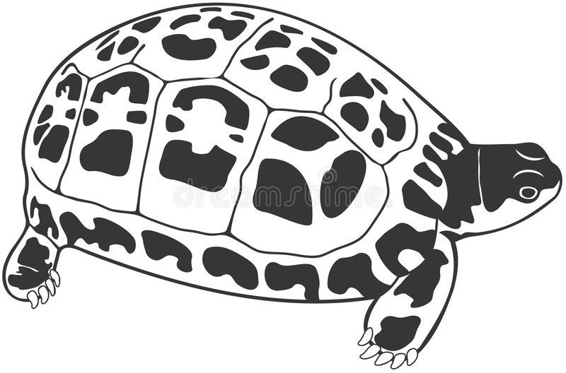 Download Turtle stock illustration. Image of clipart, drawing, reptile - 1410237