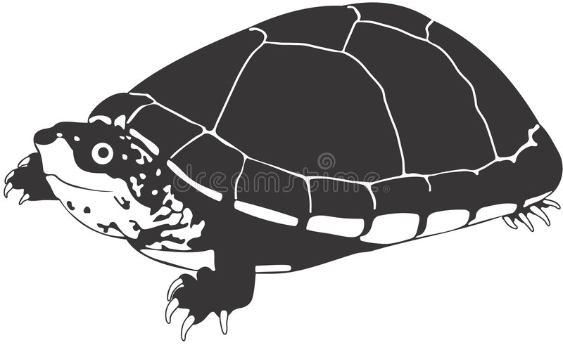 Download Turtle stock illustration. Image of nature, drawing, clipart - 1410260