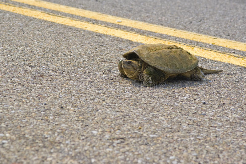 Download Turtle stock photo. Image of forest, crawling, careful - 14583498