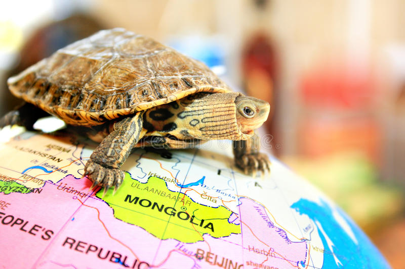 Download Turtle Stock Photography - Image: 15219342