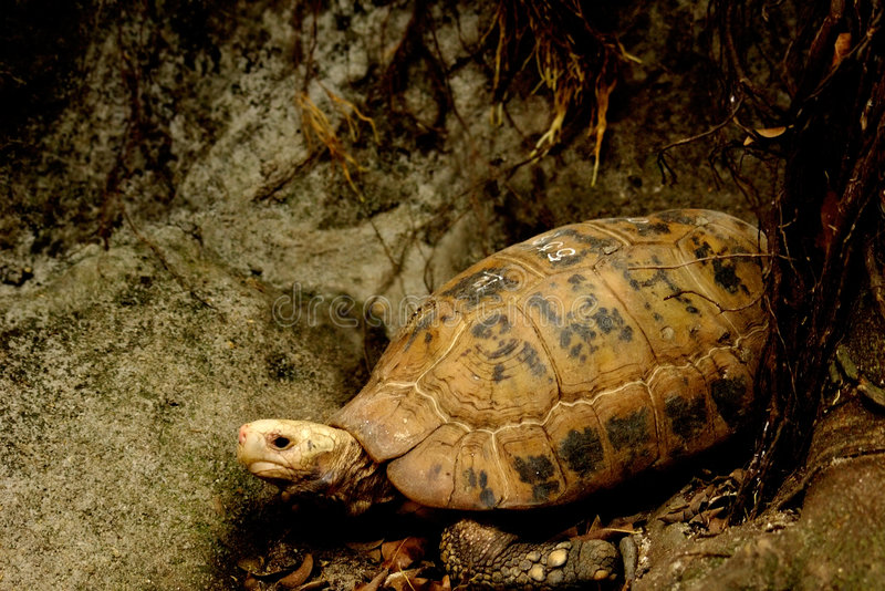 Download Turtle stock photo. Image of cute, vacation, hard, wild - 1630722