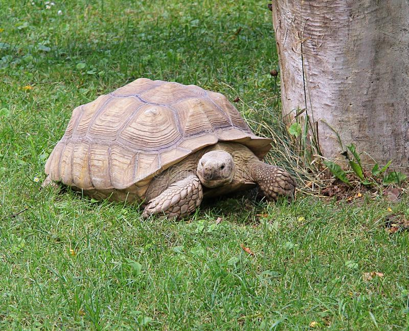 Download Turtle stock image. Image of wild, crawl, animal, reptile - 24278105