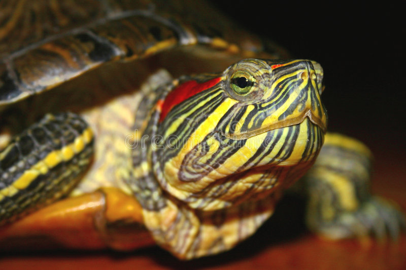 Download Turtle stock image. Image of turtle, country, indistinct - 896877