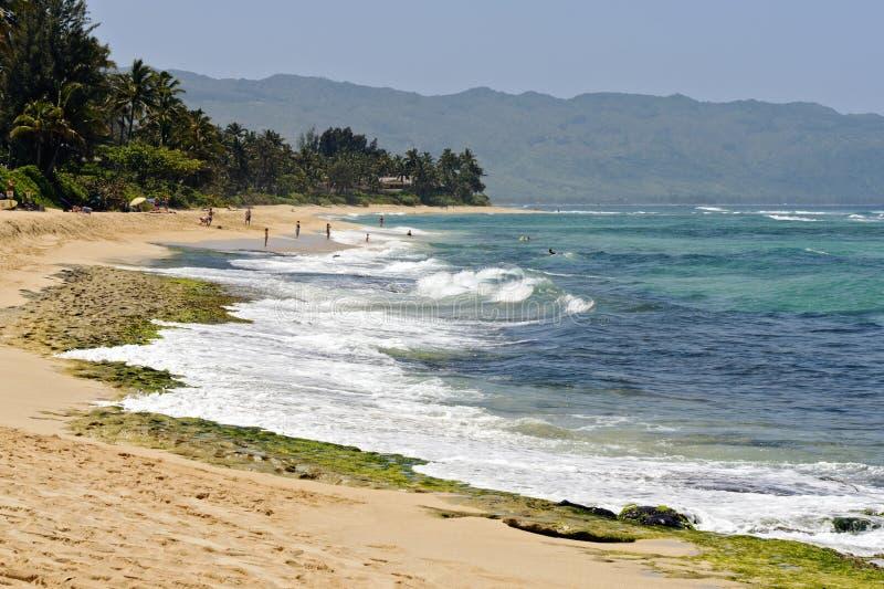 Download Turtle Beach (Laniakea), Oahu North Shore Stock Image - Image: 24211795