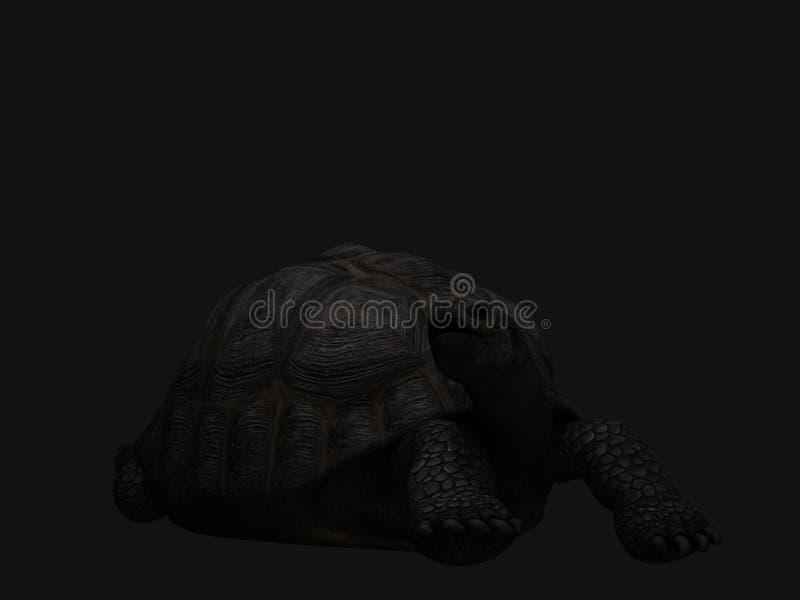Turtle, Black, Tortoise, Black And White stock photos