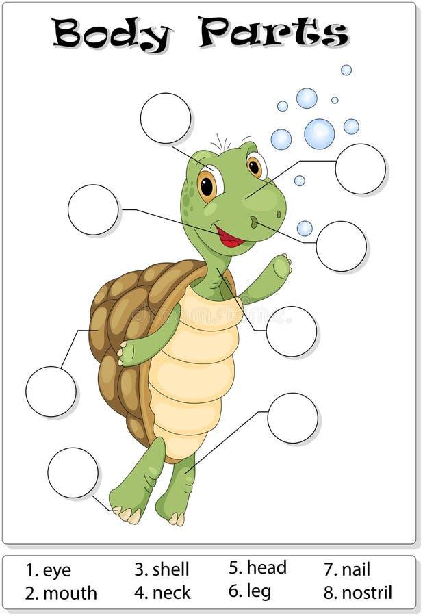 Turtle Body Parts Stock Vector Illustration Of Language 88316594