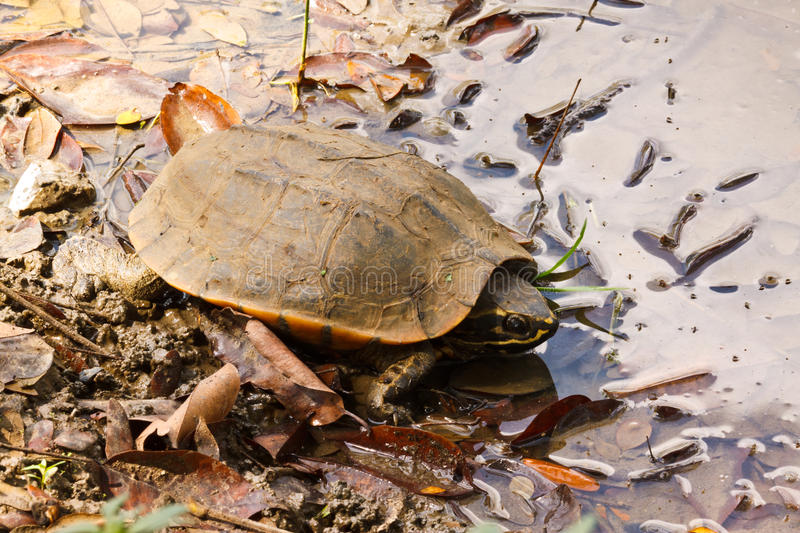 The turtle. In the canal stock photography