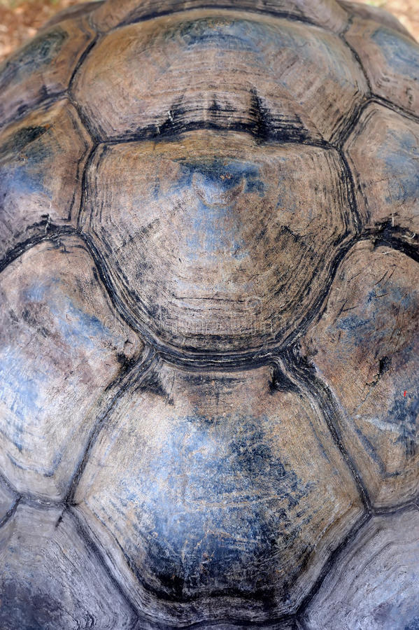 Turtle carapace. Close-up turtle shell texture detail stock images