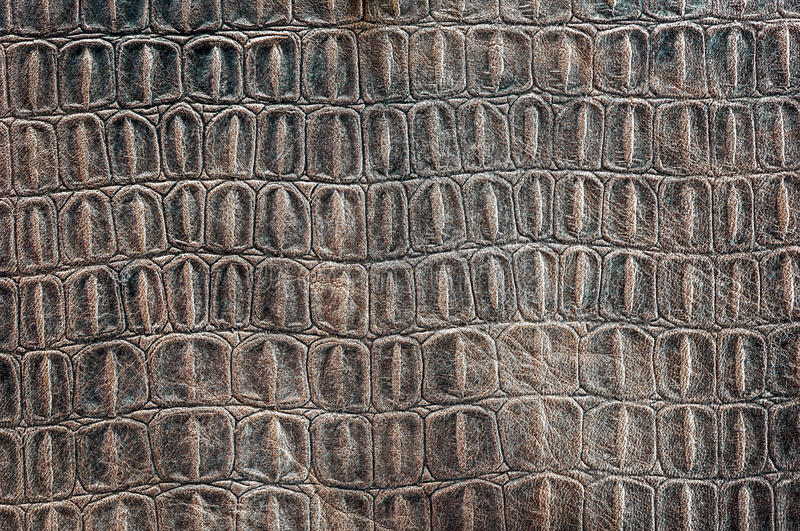 Turtle carapace pattern. Copy on the cow leather royalty free stock photo