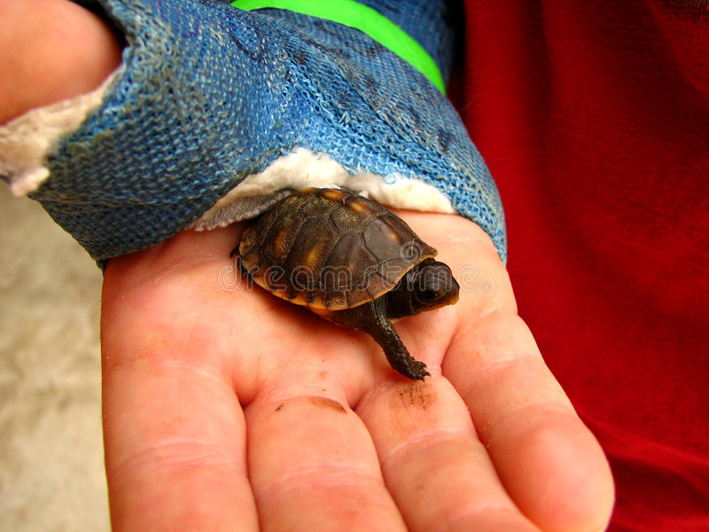 Turtle in a childs hand stock images
