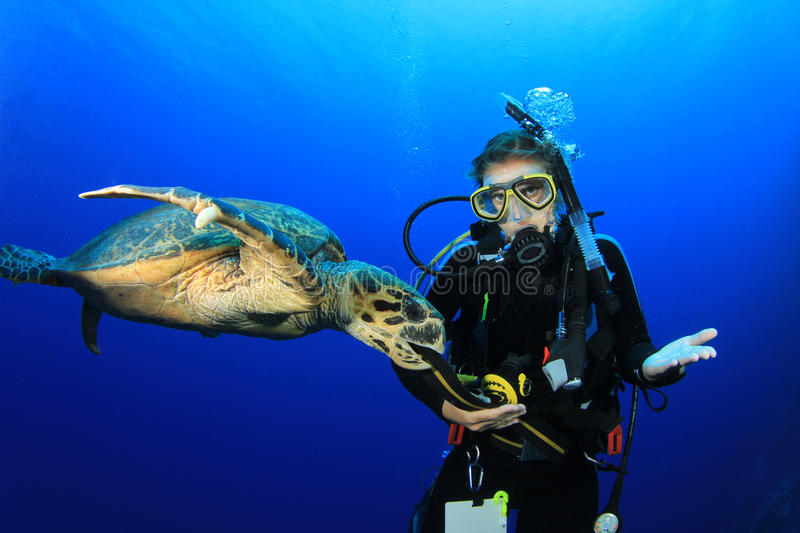 Turtle and Diver royalty free stock photography