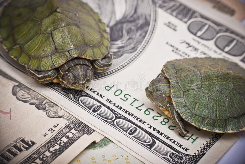 Turtle economy. When the economic situation changing to be a turtle economy, don't become a turtle stock photo