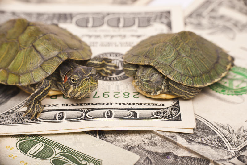 Turtle economy. When the economic situation changing to be a turtle economy, don't become a turtle royalty free stock photos