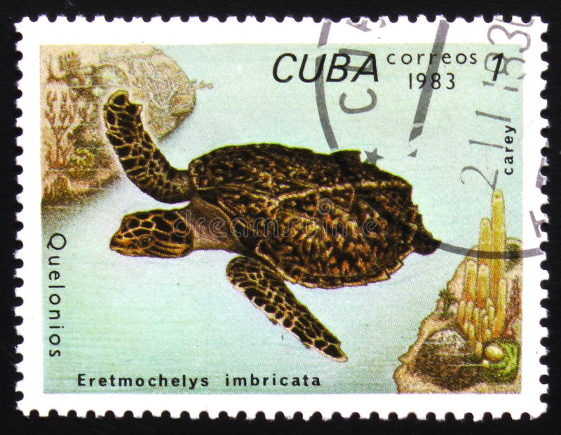 Turtle Eretmochelys Imbricata, circa 1983. MOSCOW, RUSSIA - FEBRUARY 19, 2017: A stamp printed in Cuba shows Eretmochelys Imbricata, series devoted to turtles royalty free stock photo