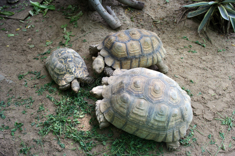 Download Turtle family stock image. Image of kids, water, group - 4418599
