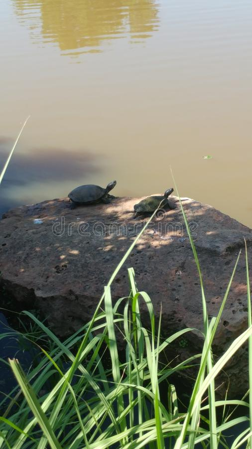 Turtle friends stock photography