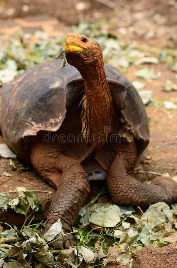 A turtle stock image