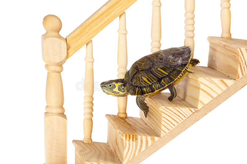 Turtle going down royalty free stock photo